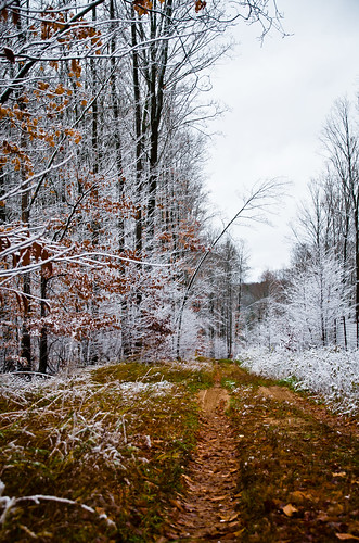 trees winter snow cold fall halloween contrast landscape woods path trail