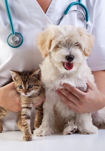 veterinary clinic,dog and cat, caucasian, check, checkup, clinic, doctor, dog, equipment, examination, examining, hand, health, healthcare, healthy, hold, holding, kitten, kitty, love, medical, medicine, nurse, occupation, people, pe | by www.ilmicrofono.it
