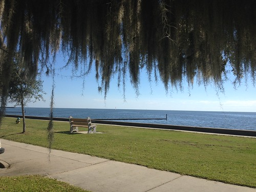 sun lake tree moss day view horizon lawn peaceful line clear causeway pontchartrain sunlught