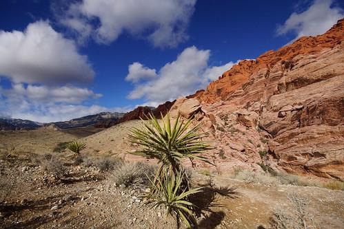 redrockcanyon usa nevada yucca calicobasin