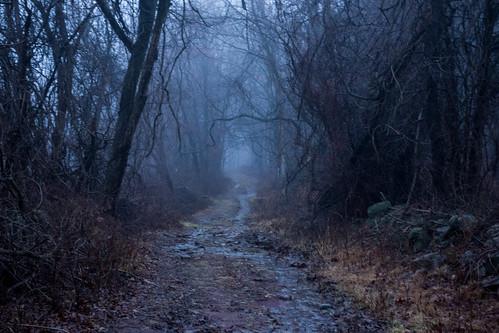 trees ny newyork fog path trail westchestercounty southsalem lewisboro sonydscrx100 onatrufarmpark