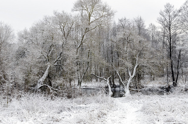 Winter. First snow.