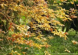 a leafy frame - Shibpur Botanical Garden #kolkata | by moon@footlooseforever.com
