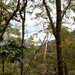 01 Viajfilos en Panama. Sendero Quetzal 22
