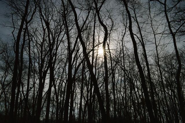 Winter sun. (Illinois)