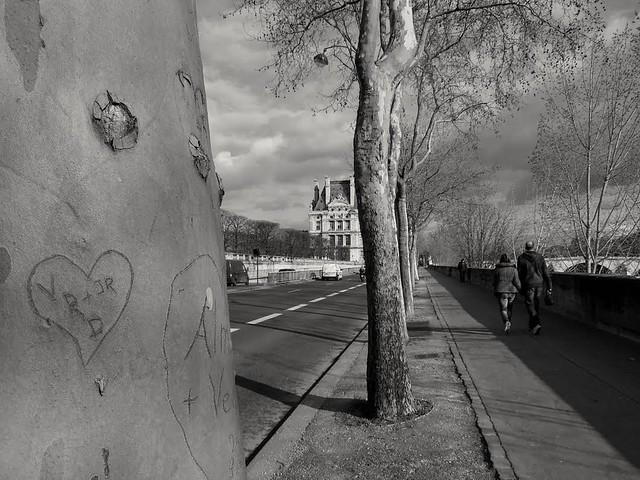 Les arbres aiment ils le romantisme ? Do trees like romantism?