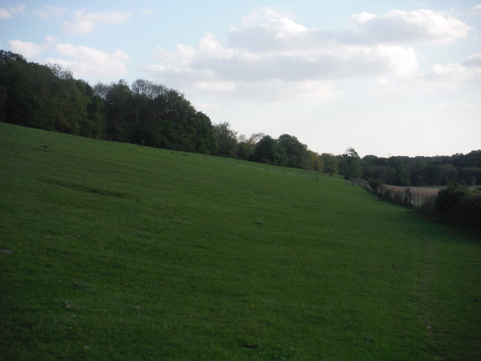 Stansted Forest, westerly edge SWC Walk Rowlands Castle Circular