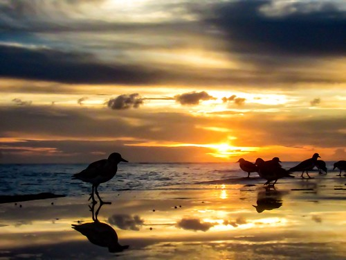 ocean sea reflection birds florida birding sunrisesunsetsceniccloudsbeach