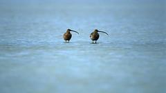 а birds_099