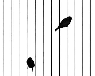 Jail Birds ©2017 Lauri Novak