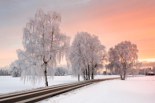 prien xf23mmf14 fujixpro2 landscape winter chiemgau trees road bavaria frozen chiemsee sunrise january snow prienamchiemsee bayern germany de