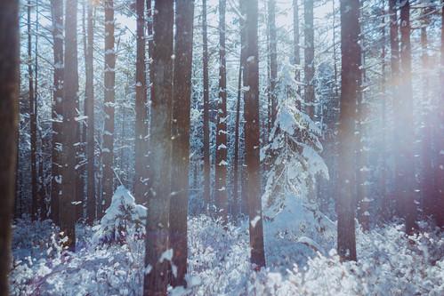 tuckerton newjersey unitedstates us zenithelios44m458mmf2 bassrivertownship bassriverstateforest nj 2017 forest winter snow