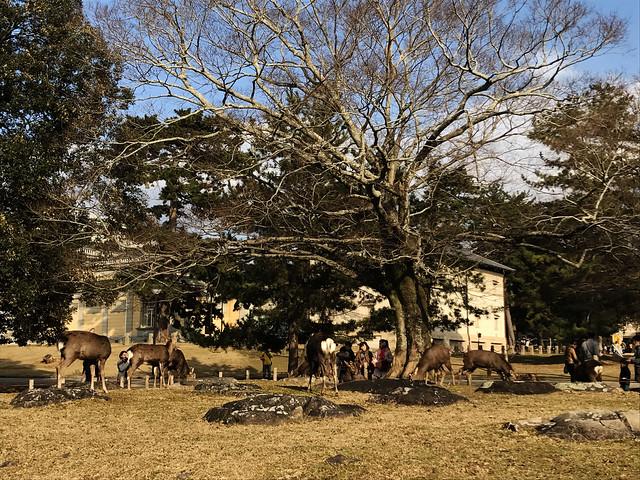 Deer Park, Nara