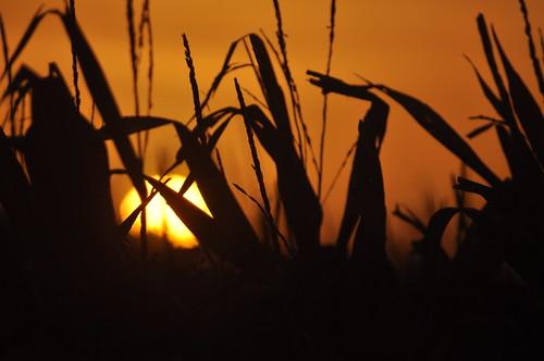 morning sunrise cambridgeshire manea