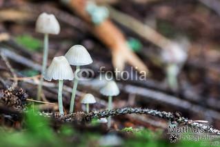 Weißer Pilz | Projekt 365 | Tag 327
