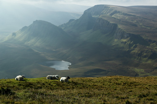 Sheep in Isle Of Skye | by ynaka29