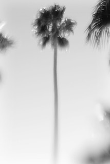 Palm tree | by LaneybugPhotography1
