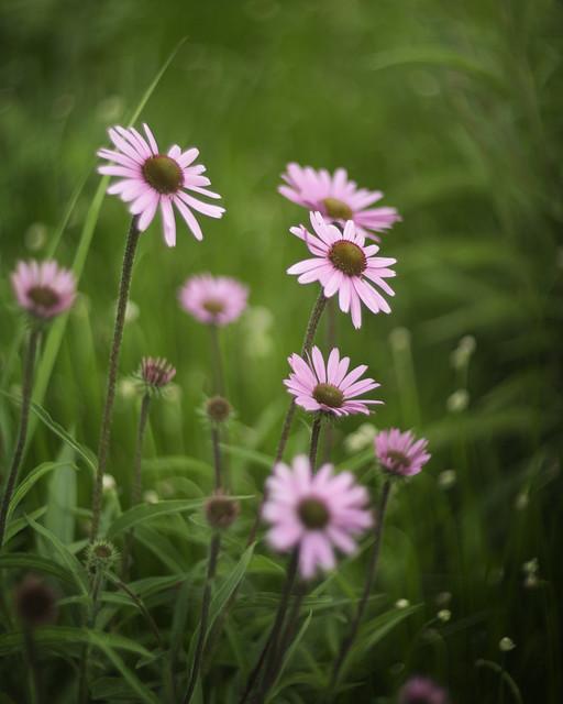 Millennium Park Flowers