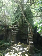 #7476 Chinese banyan (ガジュマル) attacking ruins