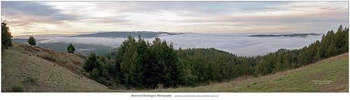 california fog redwood santacruzmountains vistapoint sequoiasempervirens sanlorenzovalley