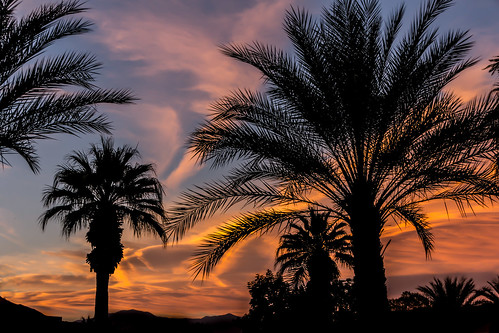 california trees sunset color unitedstates palmsprings