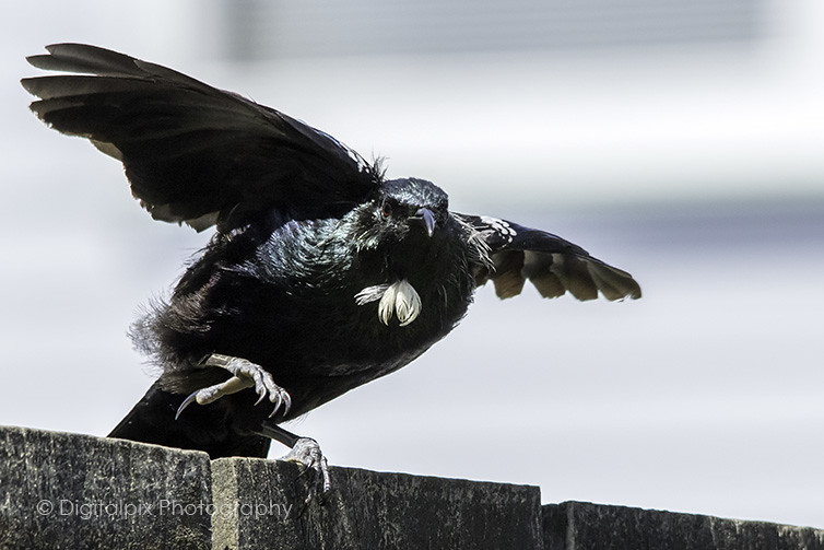 Tui take off