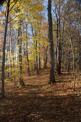 trees tree forest nikon fallcolor tn outdoor tennessee trail yabbadabbadoo kingsporttn warriorspathstatepark quantumentanglement tamron18270 d5100 tamron18270mmf3563diiivcpzd nikond5100