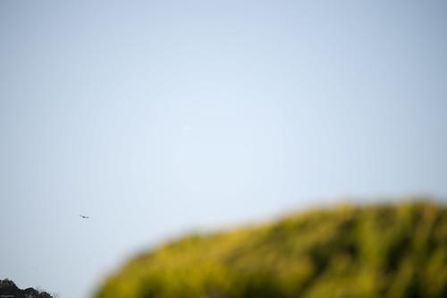 ocean sea sun japan sunrise pacific chiba 日本 太陽 the 鴨川 千葉県 太平洋 日の出 ご来光 komogawa 太海 鴨川市