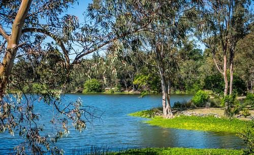 ca plants nature water outdoor lake recreation clouds california blue vasonalakecountypark grass losgatos afternoon sky green shore trees santaclaracountyparks white unitedstates us
