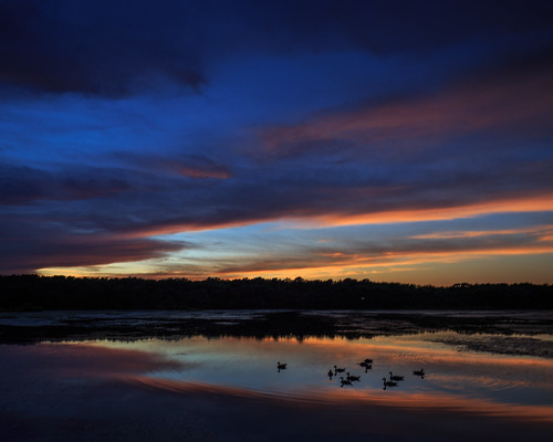 sunset sky nature water silhouette reflections landscape us newjersey unitedstates nj ducks helmetta helmettapond