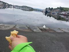 Tarbert seagull