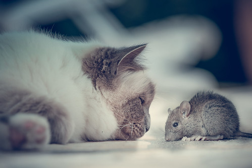 gatto vs topo