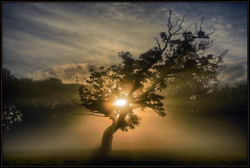 mist sunrise dawn