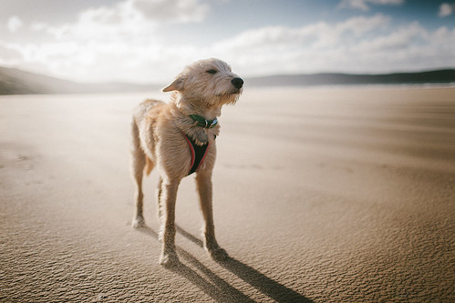 Sand Dog | by Matt Oliver.