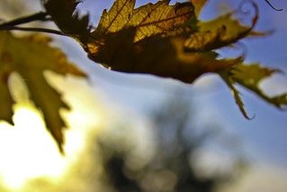 windy, leaves, autumn, winter | by karl17