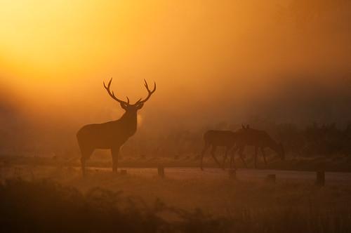 sunset mist nature fog sunrise landscape nikon stag