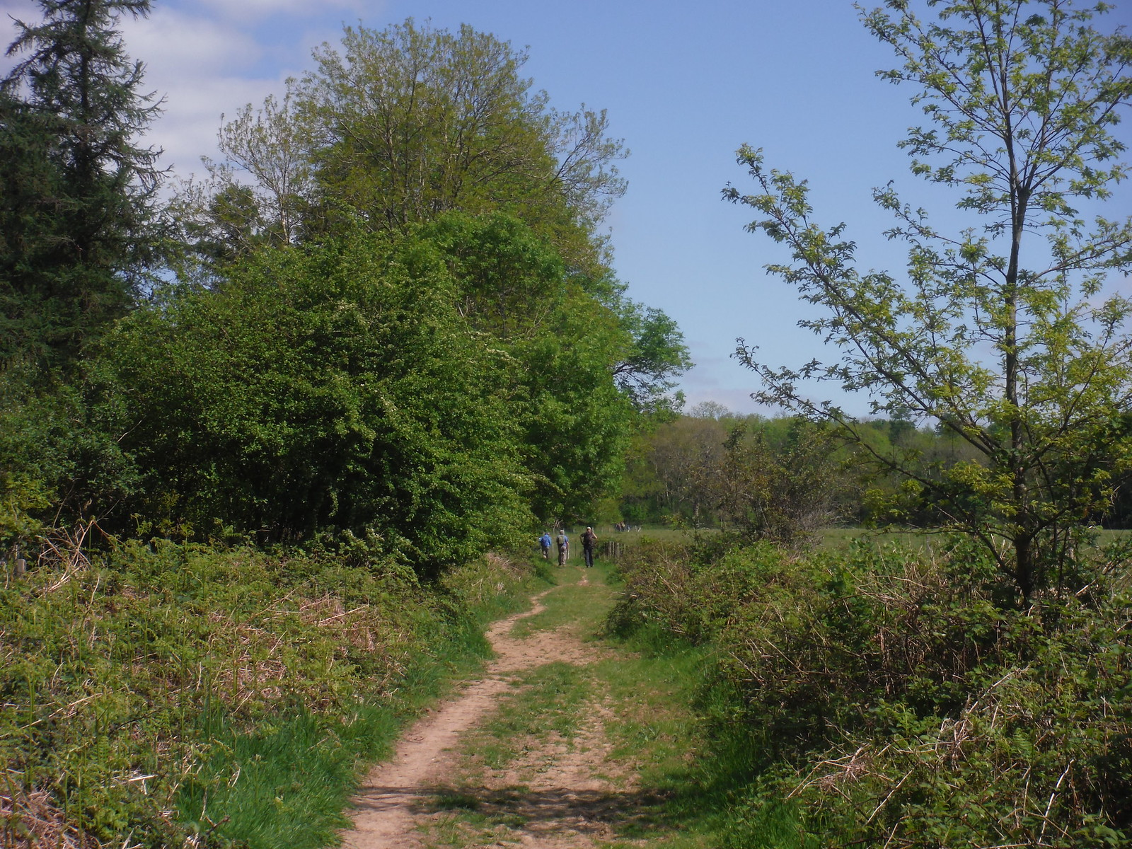 Path along Stansted Forest SWC Walk Rowlands Castle Circular
