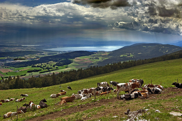 Swiss summer time, La Metairie du Neuf Chalets. Canton of Bern, The  Chasseral. Switzerland.No. 471.