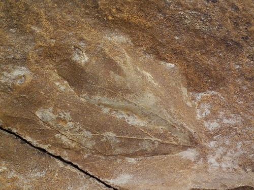 Fossil at Dinosaur Provincial Park - Alberta, Canada   by a_crafty_traveler