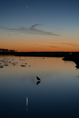cambridge sunset sky venus unitedstates mercury maryland astro easternshore greatblueheron blackwaternwr