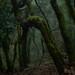 La Gomera_the rainforest_01 by mini_malist (is busy)