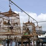 01 Viajefilos en Koh Samui, Tailandia 104
