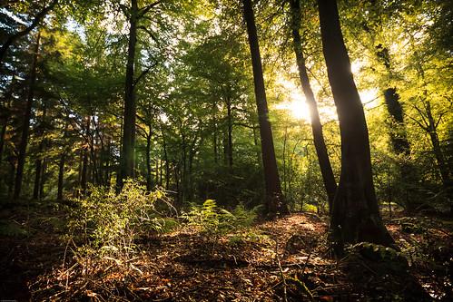 vegetation trees landscape tree forest forestofdean symondsyatrock symondsyat light england unitedkingdom gb wyevalleywalk wyevalley