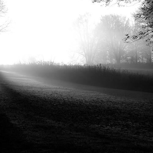 autumn trees blackandwhite bw monochrome fog square landscape blackwhite woods nikon frost foggy hills d5000 noahbw