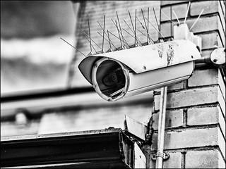 Big Brother | by Darren Wilkin