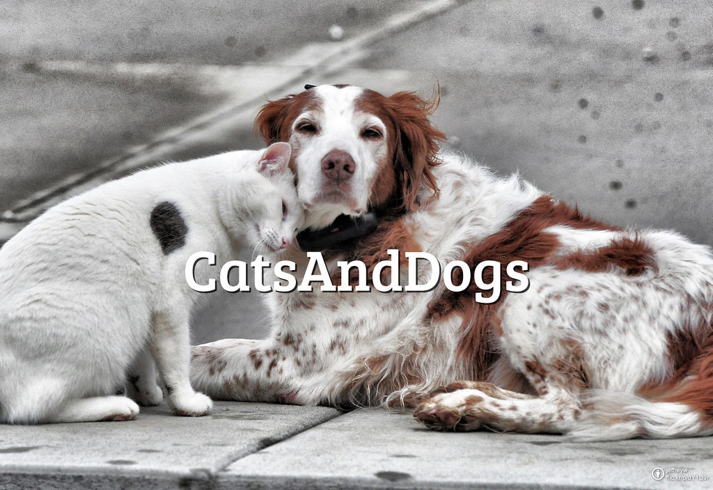#FlickrFriday: DogsAndCats | Sometimes love is so strong to pass the boundary of species.