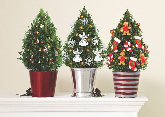 Miniature European cypress Christmas trees with lights gingerbread men stocking candy cane snowflake angel ornaments in steel, red and striped pots with pine cones on a mantle