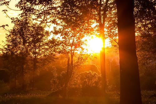 park trees sunset summer russia saintpetersburg sunrays