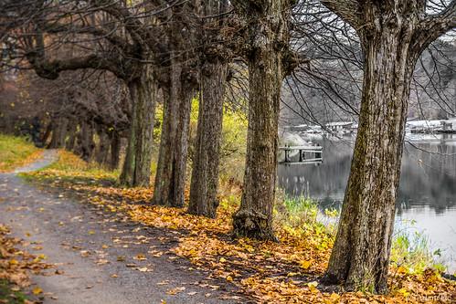 november autumn leaves nikon cloudy sweden stockholm höst nacka tamron1750 stockholmcounty d7100 svindersviken