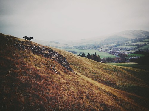 winter mist beautiful scotland countryside scenic scottish borders scottishborders hillwalk whataview iphoneography iphone4s littledoglaughedstories